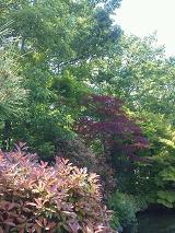 公園の木の葉の色